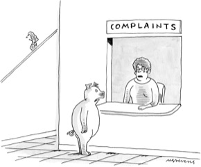 Anatomy Of The New Yorker S Pig At The Complaint